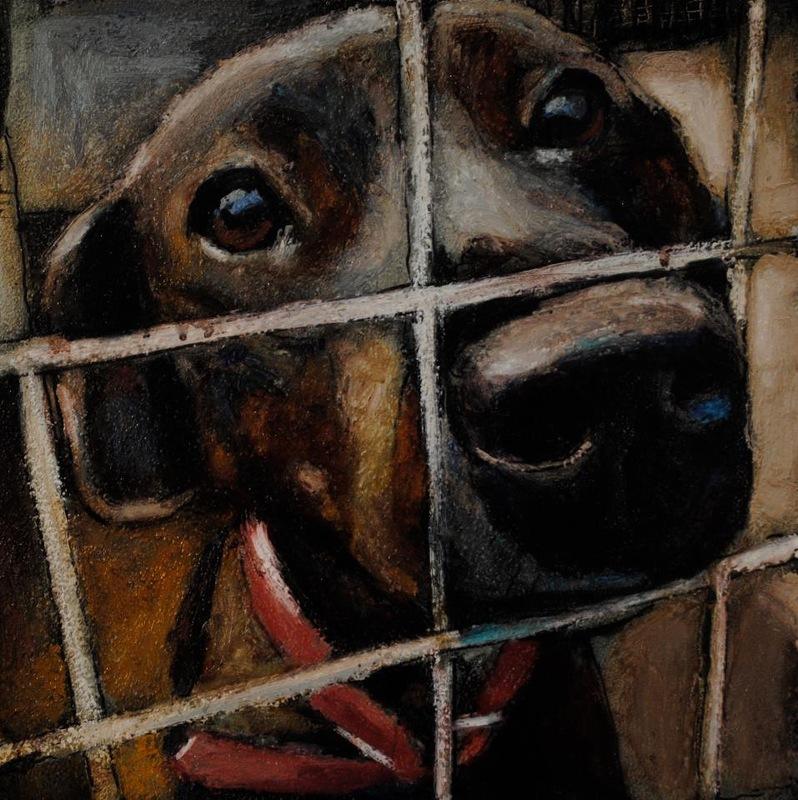 Художник Марк Барона и жестокость американских приютов для животных