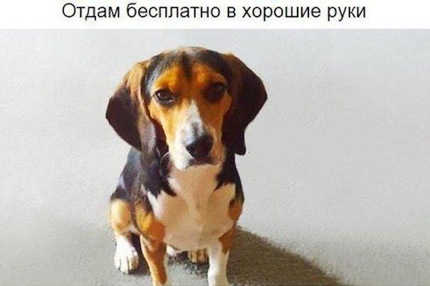 Девушка потребовала, чтобы парень избавился от собаки. И тогда он разместил это объявление….