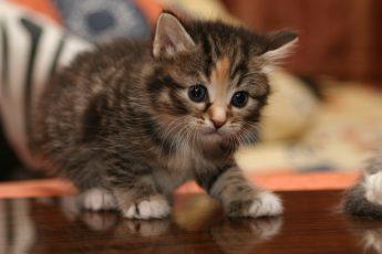 Котенок: Притча