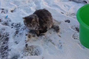 Спасение примерзшего ко льду кота