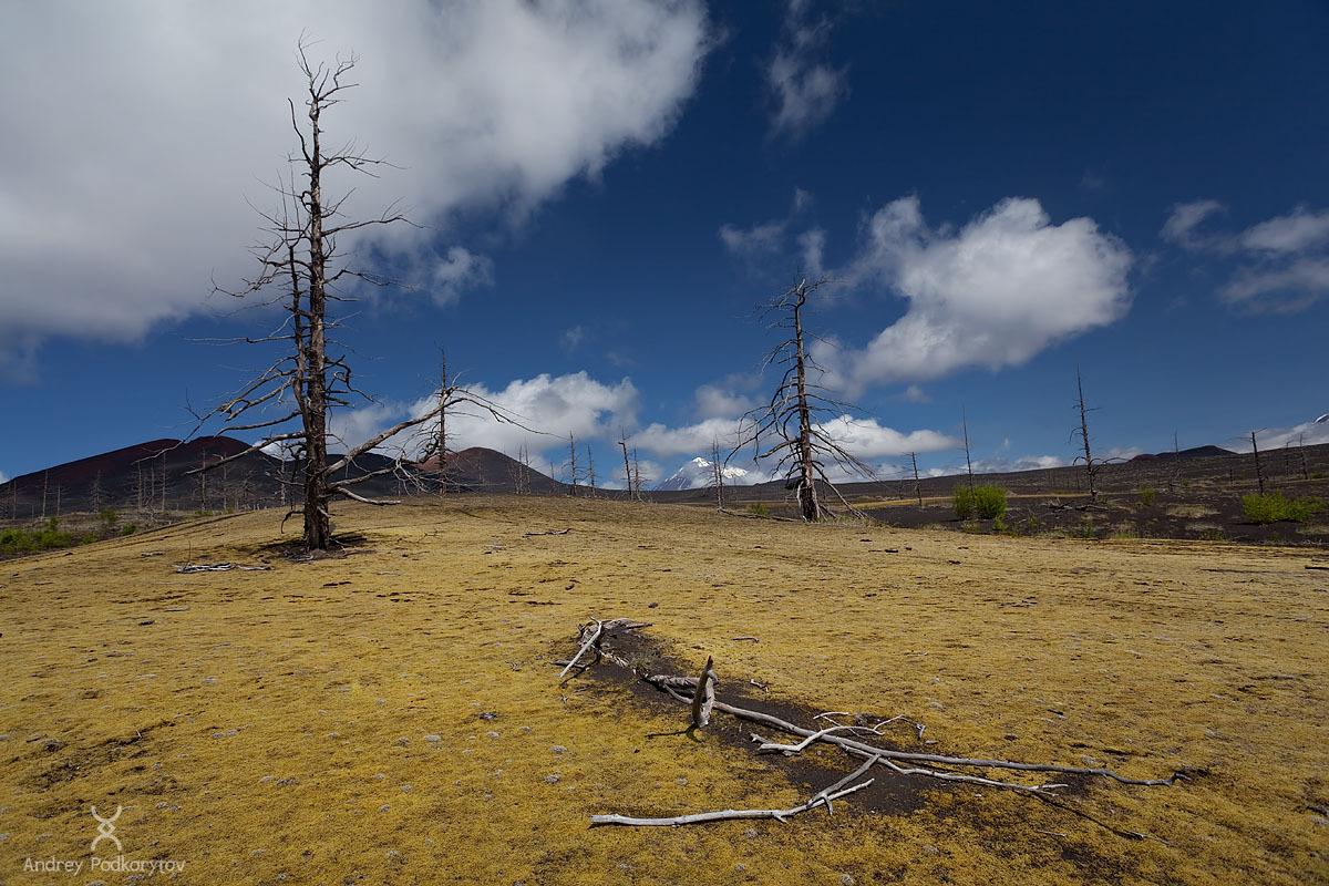 Камчатский мертвый лес