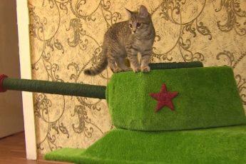Кот-танкист