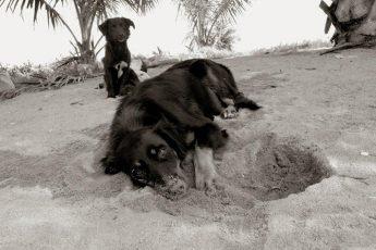 Бездомные собаки: фотосессия