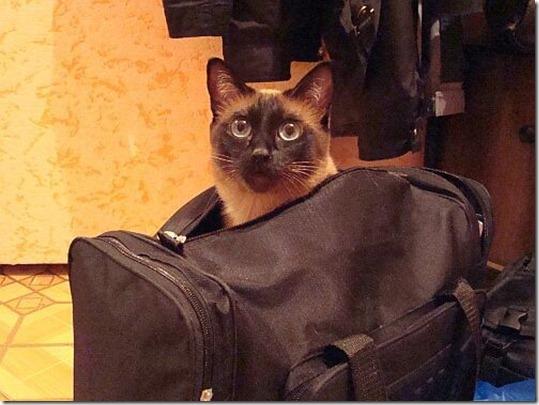 О чем Кошки знают, но не говорят …