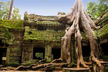 Деревья — пожиратели пространства