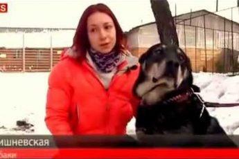 В Москве спасли привязанного к машине пса