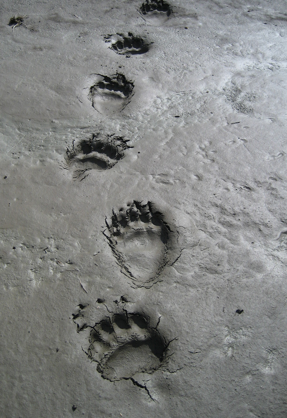 Татьяна арнольдовна медведева фото рождения дизайне ногтей