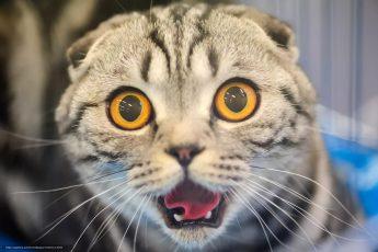 Должностная инструкция кота: юмореска