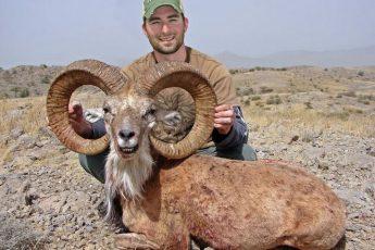 Ирония судьбы: горного барана убили собственные рога
