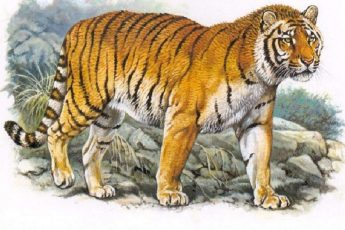 Оживление туранского тигра