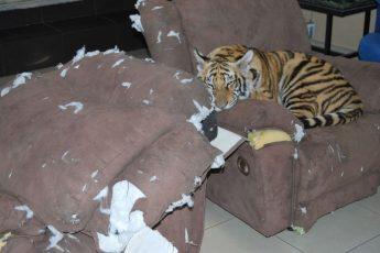 Как отучить кота драть мягкую мебель
