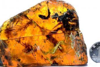 Птенец возрастом 100 миллионов лет…