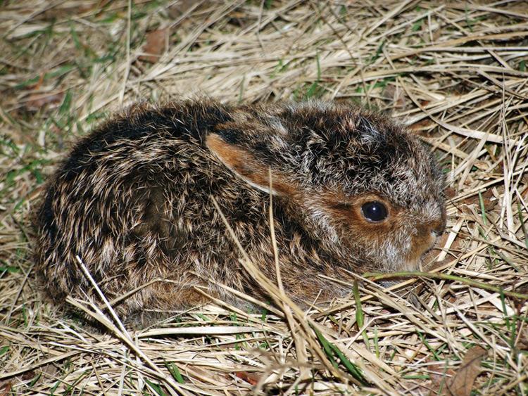 Зайцы — не трусы, они осторожные
