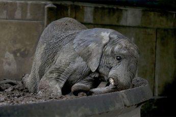 Зоопарк в столице Аргентины стал тюрьмой для животных